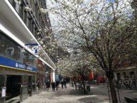 桜が咲いていた