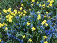 ホテルの庭にはこんな花が